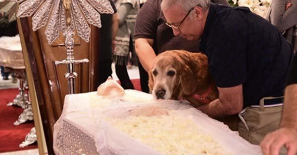 【※涙腺崩壊】『ご主人の棺の横で悲しそうにずっと鳴き続ける愛犬』最後のお別れの時、その場にいた誰もが涙した・・・!